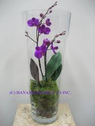 Large Round Glass Vase Orch014 Orchid In The Tall Glass Vase Dreams Do Come True