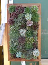 succulent wall diy tended