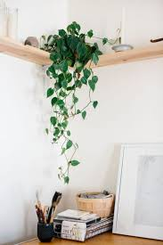 Home Decoration With Plants by 19 Unique Home Decor Ideas With Plants Futurist Architecture