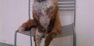 Taxidermy Fox Meme - taxidermy fox meme archives greetyhunt