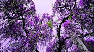purple flowers tree 3 background hdflowerwallpaper