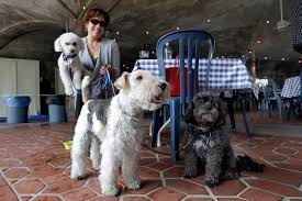 bichon frise 17 years old michigan restaurants may allow dogs van eerden foodservice