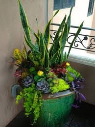 Plant Combination Ideas For Container Gardens - container garden with succulents mother in law u0027s tongue and other