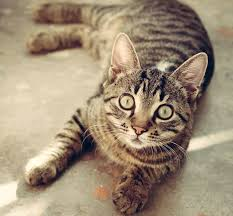 what are preventative treatments and why are they important in cats