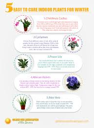 5 easy to care indoor plants for winter infographic goldensun
