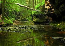 Alabama Forest images National forests of alabama encyclopedia of alabama jpg