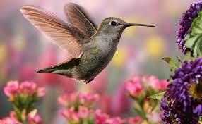 hummingbird flowers 25 flowers that attract hummingbirds