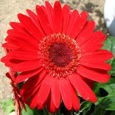 may 2010 margaret s garden