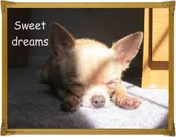 Sweet Dreams Meme - funny best cute sweet dreams meme image quotesbae