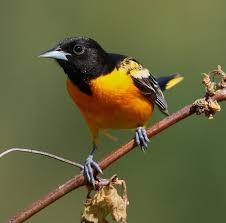 summer u0027s birds are already on their way back to minnesota