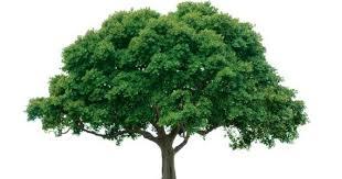 the tree audit brisbane