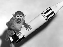 animals in space wikipedia
