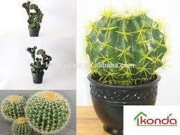 wholesale ornamental cactus cactus and succulents artificial