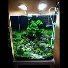 nano aquascape nano shrimp tank google search wow aqua pets pinterest