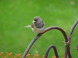 backyard birding u2013 fossils u0026 fauna