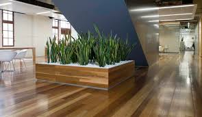 envirogreenery plants interior plant portfolio