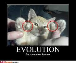 Ceiling Cat Meme - flying cat meme google search ceiling cat buybull pinterest