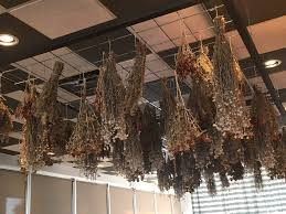 Hanging Decor From Ceiling by Cool Decor Dried Flowers Hanging From The Ceiling Yelp