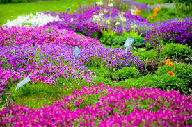 google images flower garden of flowers pictures photos and images for facebook