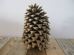 pine cone home decor home decor