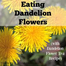 eating dandelion flowers dandelion flower tea recipe proverbs