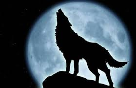 wolf moon january 12 2017 shifting vibration