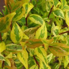 plante vivace soleil plantes pour le soleil clematite net spécialiste des plantes
