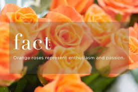 Flowers Colors Meanings - know your rose meanings give the right rose fresh by ftd