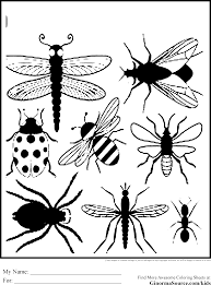 insect coloring sheets insects pages for kids printable free