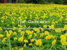 the greenery nursery and garden center