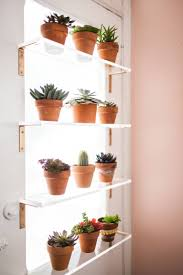 plant shelves over window reno office pinterest plant