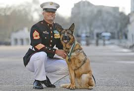 belgian shepherd us army marine handler always knew lucca the bomb sniffing dog was special