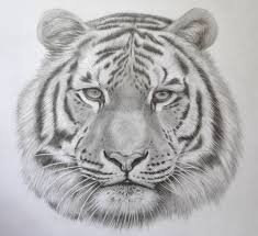 awesome sketches of animals cool drawings of animals pencil art