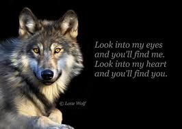 Lone Wolf Meme - look into my eyes and you ll wall4k com