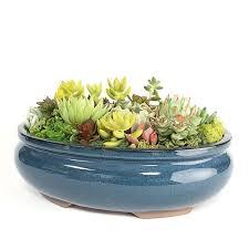succulent arrangements blue oval succulent arrangement