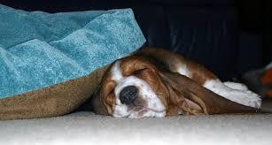 boxer dog kills man the 3 most aggressive dog breeds revealed u2013 pit bulls