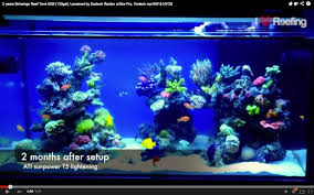 Types Of Aquarium Fish The Two Year Progress Video Of Schwing U0027s Reef Featured Reefs News