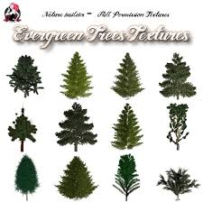 second marketplace nature builder evergreen trees textures