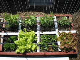 my square foot gardening blog is u2026 u2013 the wealthy earth