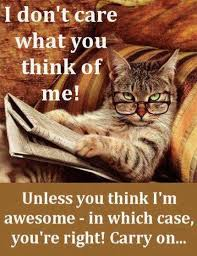 Awesome Quotes About Cats Being - i dont care what you think about me funny quotes memes quote cat