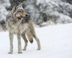 adopt a wild animal and help protect wildlife wildlife adoption