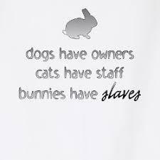 rabbit merchandise rabbit gifts t shirts clothing rabbit merchandise rabbit
