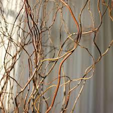 curly willow branches curly willow branches green bulk fresh