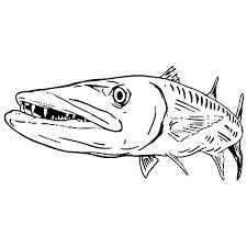 sea predator barracuda fish colouring happy colouring