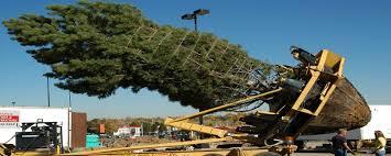 colorado tree spade inc large tree moving and transplanting