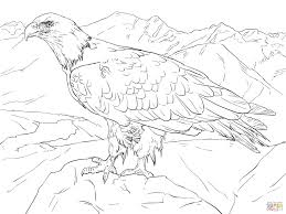 marvellous bald eagle coloring page bald eagle coloring page image