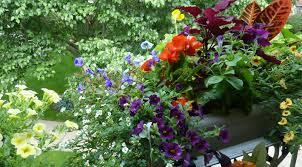 flower gardening for beginners www pyihome com