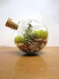 70 best terrarium images on pinterest mini gardens moss
