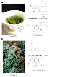 ch105 chapter 9 organic compounds of oxygen chemistry
