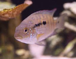 Marine Aquascaping Techniques Aquascaping Tips To Reduce Aggression In Fish Ratemyfishtank Com